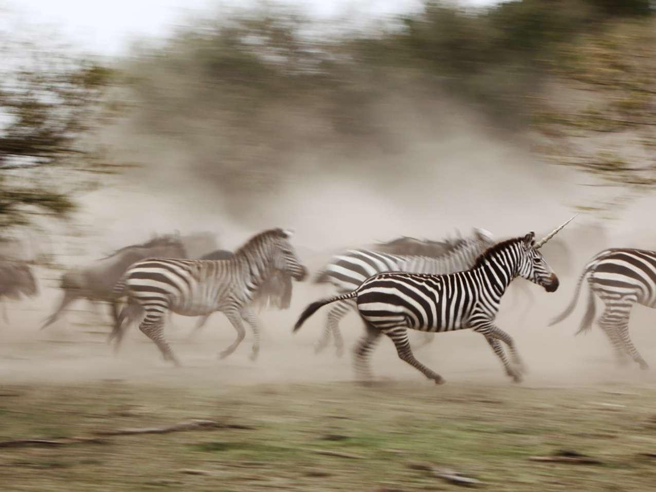 We hunt unicorns, but must also value technology zebras
